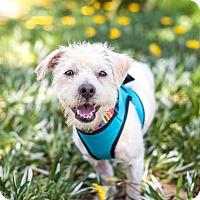 Adopt A Pet :: Brutus - Van Nuys, CA