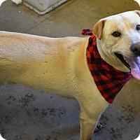Adopt A Pet :: Brian - Walthill, NE