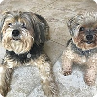Adopt A Pet :: Samantha (Sam) - Royal Palm Beach, FL
