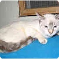 Adopt A Pet :: Blossom - Shelton, WA