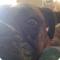 Adopt A Pet :: Sadie - Northumberland, ON