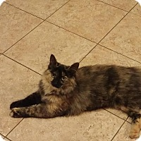 Adopt A Pet :: Callie - Villa Hills, KY
