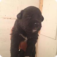 Adopt A Pet :: Aunt Beru - Saskatoon, SK