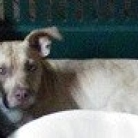 Adopt A Pet :: Gordo - Glenwood, GA