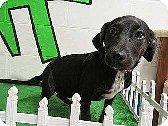 Terrier (Unknown Type, Medium) Mix Dog for adoption in Laingsburg, Michigan - Carrie
