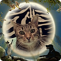 Adopt A Pet :: BLANCHE - Brea, CA