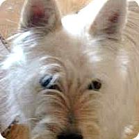 Adopt A Pet :: Clover-ADOPTION PENDING - Boulder, CO