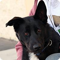 Adopt A Pet :: Mattie - Palmdale, CA