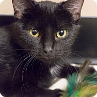 Adopt A Pet :: Lucinda - Chicago, IL