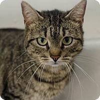 Adopt A Pet :: Joan - Greenwood, SC