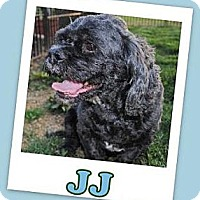 Cocker Spaniel/Shih Tzu Mix Dog for adoption in Pataskala, Ohio - J J