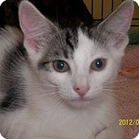Adopt A Pet :: Morgan - Riverside, RI