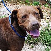 Adopt A Pet :: Butter - Cookeville, TN
