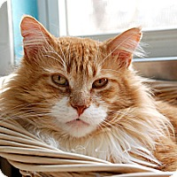 Adopt A Pet :: Bertie - Chicago, IL
