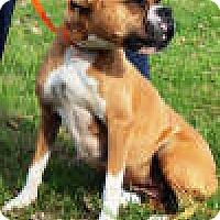 Adopt A Pet :: Trudy - Sunderland, MA