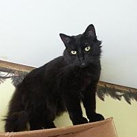 Adopt A Pet :: Ginger - Brainardsville, NY
