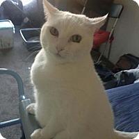 Adopt A Pet :: Sadie - Laguna Woods, CA
