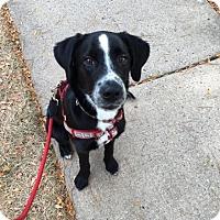 Adopt A Pet :: Lucy - North Brunswick, NJ
