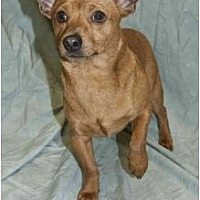 Adopt A Pet :: Maxillion - Colton, CA