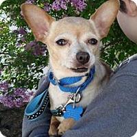 Adopt A Pet :: MJ - West Des Moines, IA