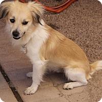 Adopt A Pet :: Brigham - Phoenix, AZ