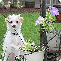 Adopt A Pet :: Robin - Statewide and National, TX
