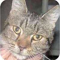 Adopt A Pet :: Susie - Kirkwood, DE