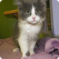 Adopt A Pet :: Dexter - Dover, OH