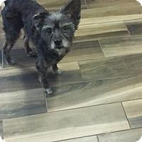 Adopt A Pet :: Tammy - Brooksville, FL