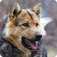 Adopt A Pet :: TUCKSTER - Ile-Perrot, QC