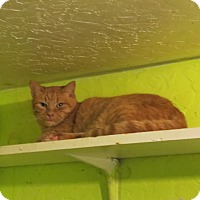 Adopt A Pet :: Citrus - Coos Bay, OR