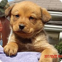 Adopt A Pet :: Indiana (6 lb) Video! - Sussex, NJ