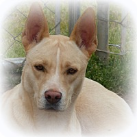 Adopt A Pet :: Buffy - Anderson, SC