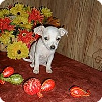Adopt A Pet :: Abby - Chandlersville, OH