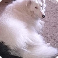 Adopt A Pet :: Jasmine - Abingdon, MD