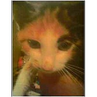 Adopt A Pet :: Lorelei - Owasso, OK