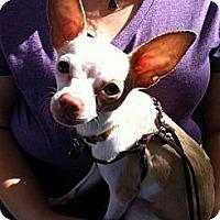 Adopt A Pet :: Cricket - North Hollywood, CA