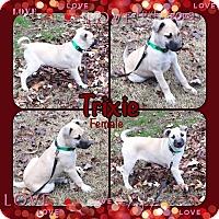 Adopt A Pet :: Trixie pending adoption - Manchester, CT