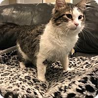 Adopt A Pet :: Anastasia - Colorado Springs, CO