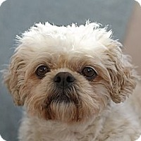 Adopt A Pet :: Maggie - Rigaud, QC
