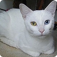 Adopt A Pet :: Giselle - Alexandria, VA