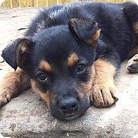 Adopt A Pet :: Garbo - Somers, CT