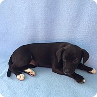 Adopt A Pet :: Mysti - East Sparta, OH