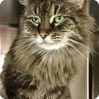 Adopt A Pet :: Cyndi - Webster, MA