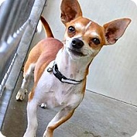 Adopt A Pet :: Howie - Orange, CA