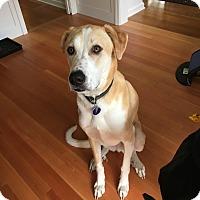 Adopt A Pet :: Oakley - Silverdale, WA