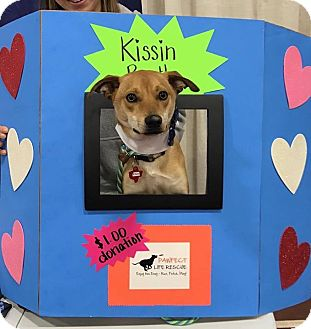 Terrier (Unknown Type, Medium)/Labrador Retriever Mix Dog for adoption in Uxbridge, Massachusetts - Elvis