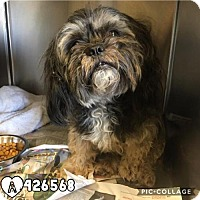 Adopt A Pet :: WAFFLES - San Antonio, TX