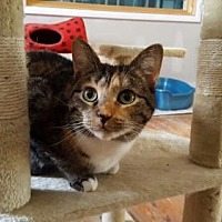 Adopt A Pet :: Calypso - Stroudsburg, PA