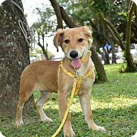 Adopt A Pet :: Ada - Castro Valley, CA